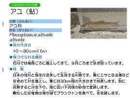 6ページ。ファイル名: 07s-2.jpg