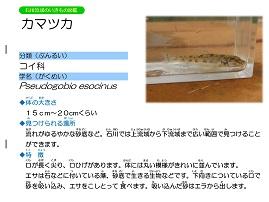 11ページ。ファイル名: 12s-7.jpg