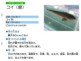 13ページ。ファイル名: 14s-9.jpg