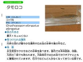 14ページ。ファイル名: 15s-10.jpg