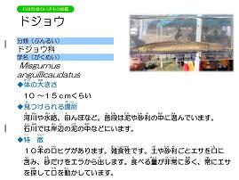15ページ。ファイル名: 16s-11.jpg