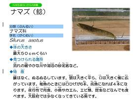 16ページ。ファイル名: 17s-12.jpg